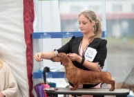 Donya BOB at dachshund specialty in Vladivostok